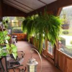 Porch Ferns